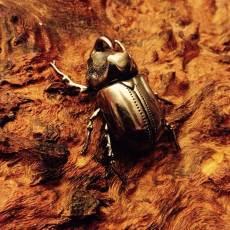 Rhino-Beetle-10---Emma-Keating-Jewellery