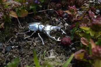 Stag-Beetle-6---Emma-Keating-Jewellery