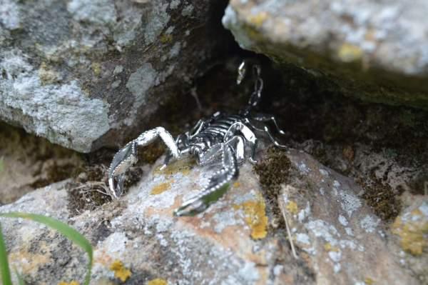 Sheerness Scorpion Orn9 - Emma Keating Jewellery__sm