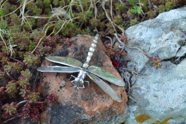 Dragonfly Brooch 1s - Emma Keating Jewellery