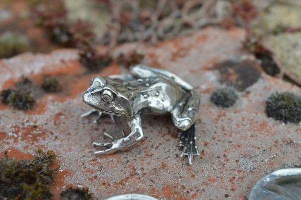 Common Frog L6s - Emma Keating Jewellery