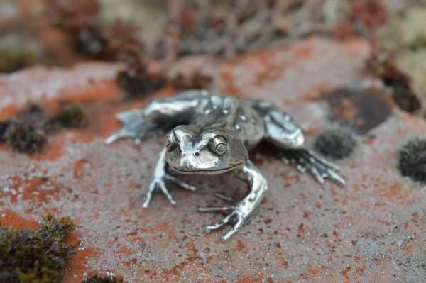Common Frog L7s - Emma Keating Jewellery