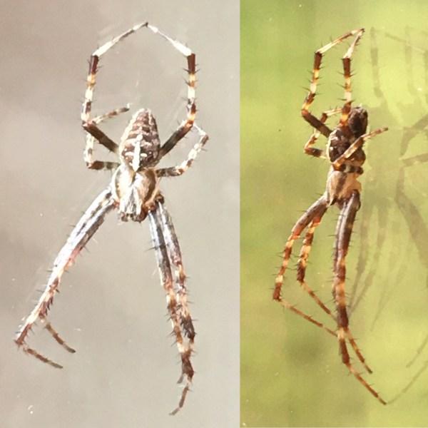 Orb Web Spider - Emma Keating Jewellery