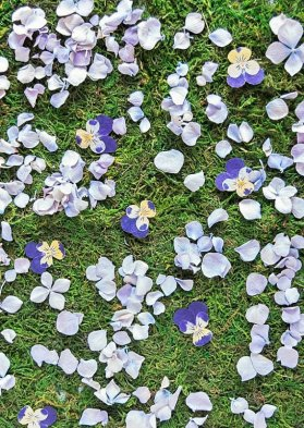 dried petals on grass after tossing