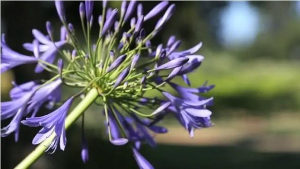 purple flowers at wedding