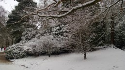Snowy Golden Acre Park