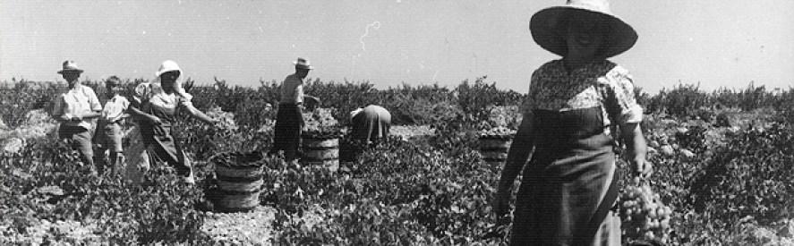 history of wine in malta
