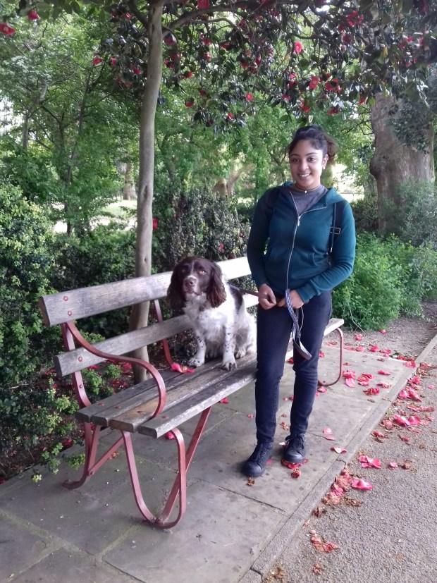 Freddie, our English Springer Spaniel, for his dog Walking!!