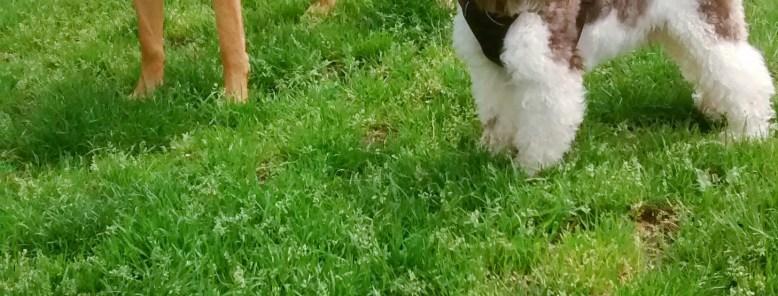 Dog Walking fun with EmmanuelleChaix