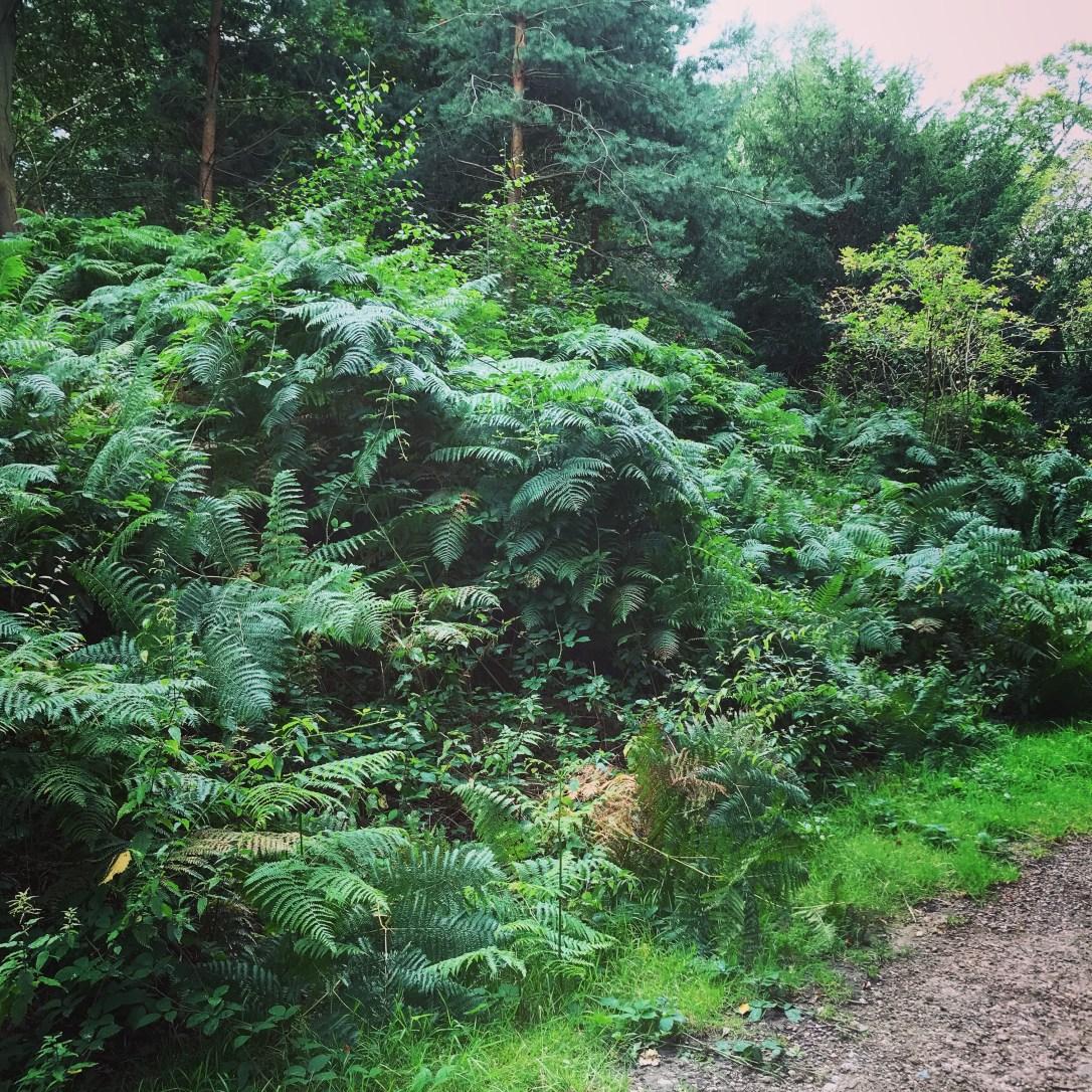 Garden Design Hampstead