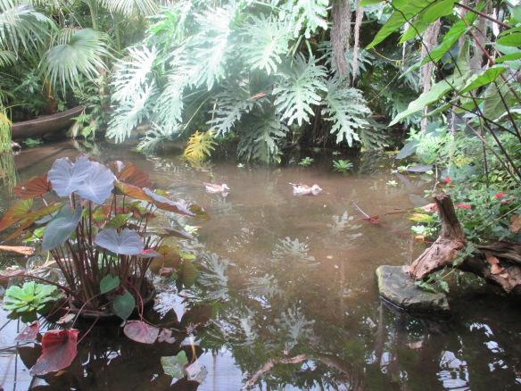 pond at the rainforest