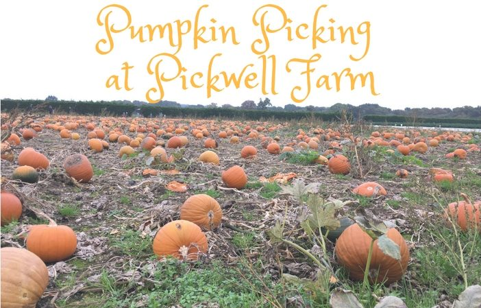 pumpkin picking at pickwell farm