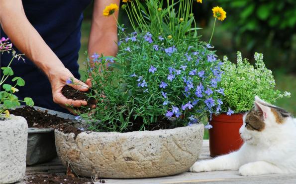 potting up plants