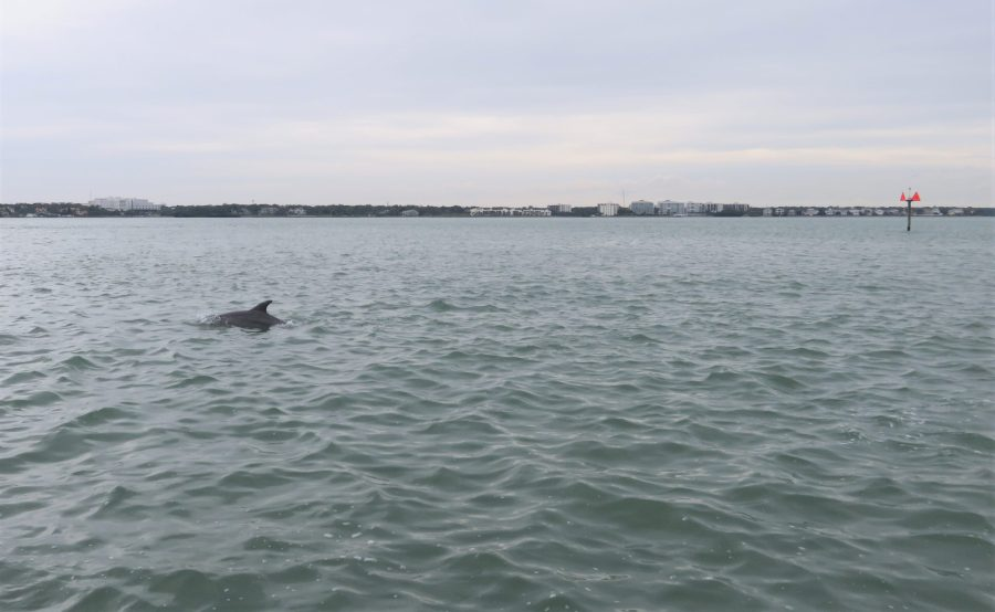 dolphin popping up in the water