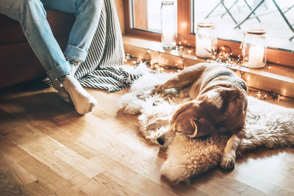 a dog laying on a rug on the flooring next to his owner