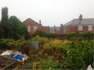Overgrown allotment plot before clearing