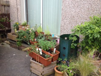 Some of the herb pots (just some!)