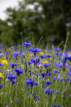 From the meadow at RBGE