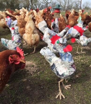 Rikke Digerud Chickens 4