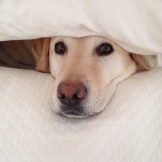 Dog Under Cover - WIY