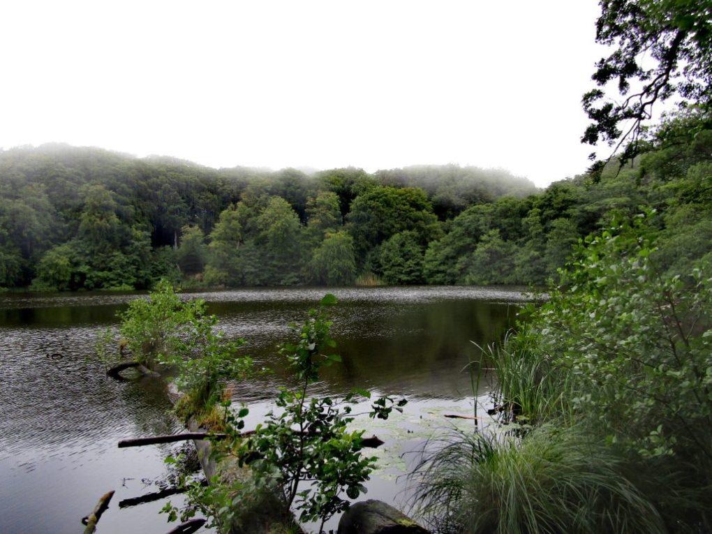 Cosa vedere a Rügen: un laghetto nel parco nazionale di Jasmund