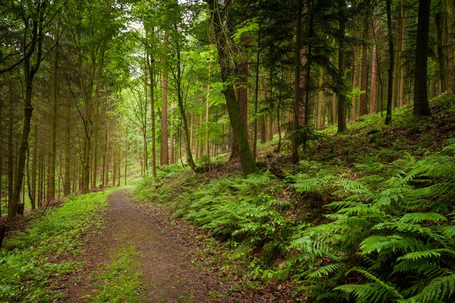 forest-path-germany.jpg.653x0_q80_crop-smart