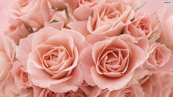 pink-roses-tumblr-background-wallpaper-3