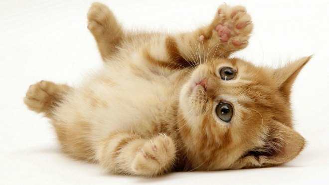 gatinhos-dourados