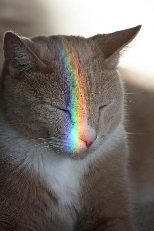 gato-arco-iris