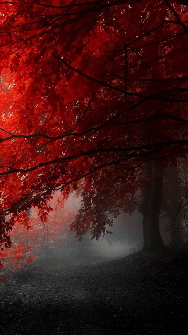 Foggy-red-tree-nature-mobile-1080x1920-Wallpaper