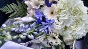 Empath Editor Blue Flowers Background