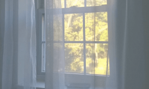 Window with curtains and view of trees and nature