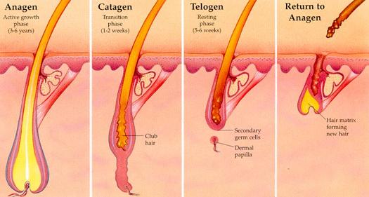 Permanent Laser Hair Removal Clinic Delhi NCR