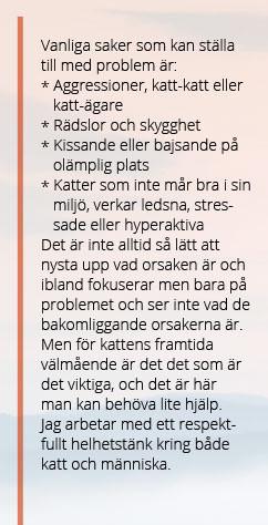 Textplattor_katt