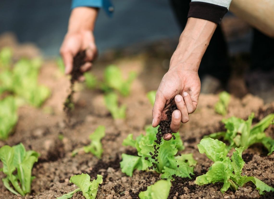 8 Important Things Your Garden Is Trying To Tell You Bob Vila