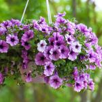 18 Best Hanging Plants For Indoors And Out Bob Vila Bob Vila