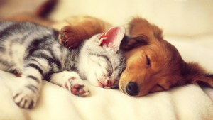 cute-sleeping-dogs-and-cats-wallpaper-1