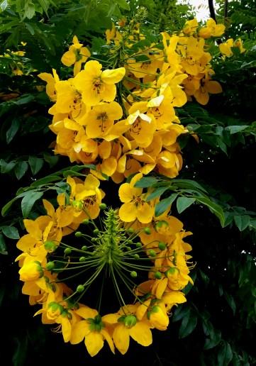 2016-06-30-tree-flower-2