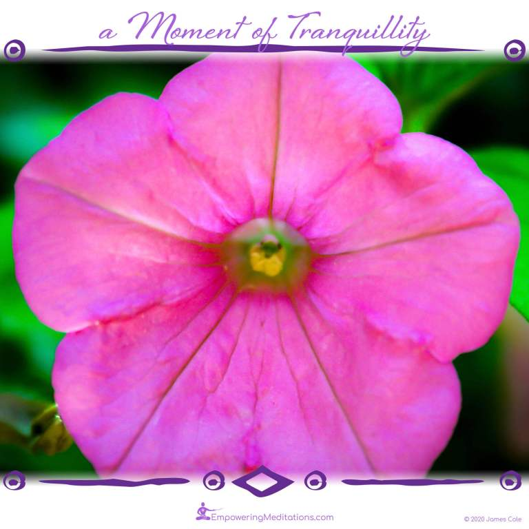 a Moment of Tranquillity - Pink Flower