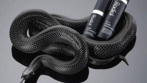emprender con veneno de serpiente