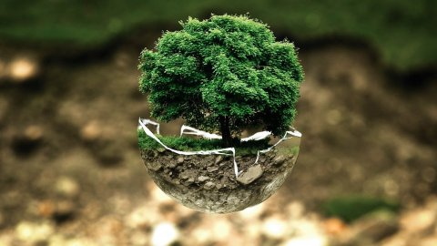 What Can an Individual do to Help the Environment