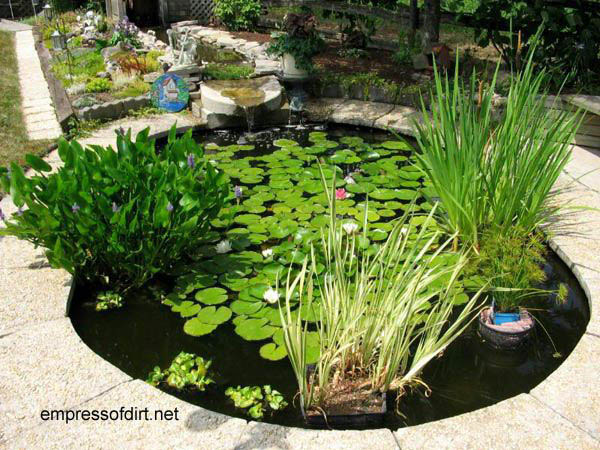 Small Backyard Fish Pond Ideas