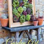 Diy Succulent Wall Planter Empress Of Dirt