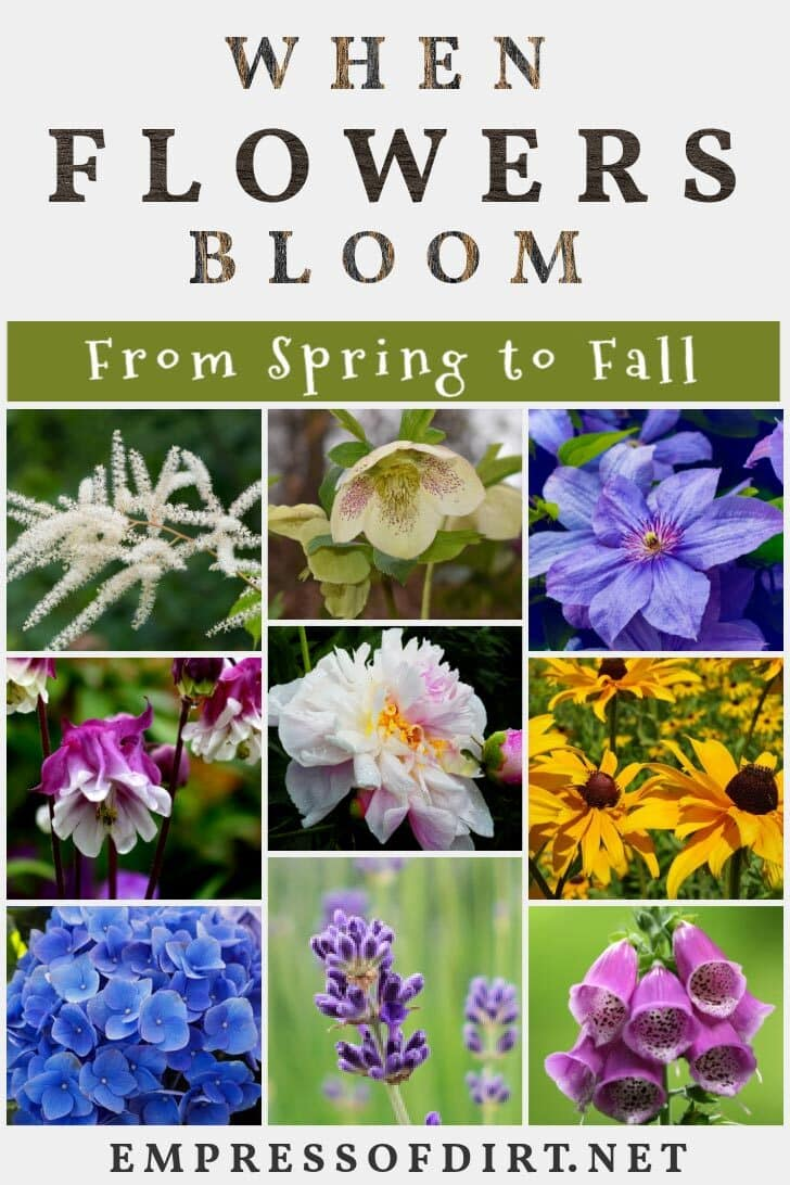 Perennial Flower Bloom Times From Spring To Fall