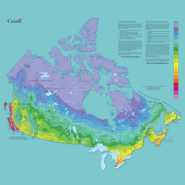 How To Find Your Canadian Plant Hardiness Zone Empress Of Dirt