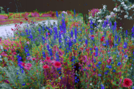 flower-bed-manipulated-dry-brush-copy