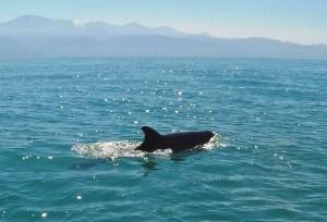 a dolphin jumping through the ocean