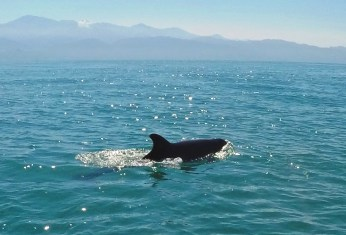 a dolphin jumping through the ocean, ecotourism