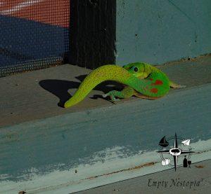 green gecko peeking over his tail