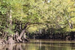 kayaking the Caddo Lake